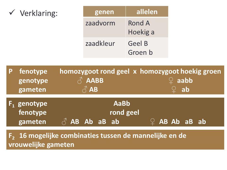 Verklaring: genen allelen zaadvorm Rond A Hoekig a zaadkleur Geel B