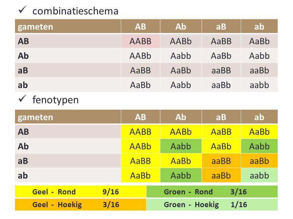 combinatieschema fenotypen gameten AB Ab aB ab AABB AABb AaBB AaBb