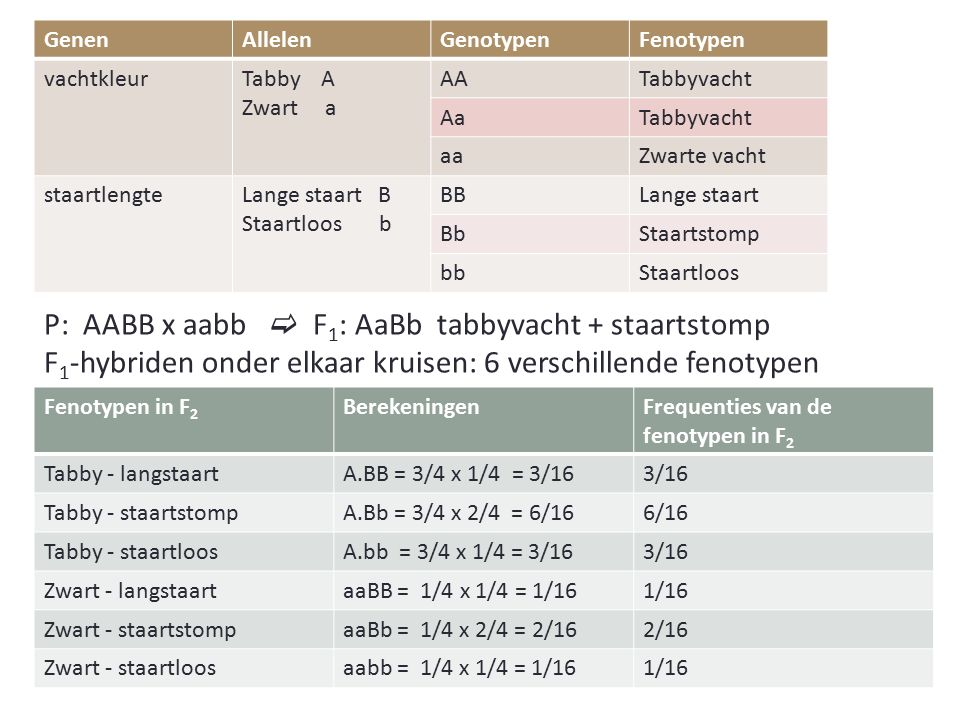 P: AABB x aabb  F1: AaBb tabbyvacht + staartstomp