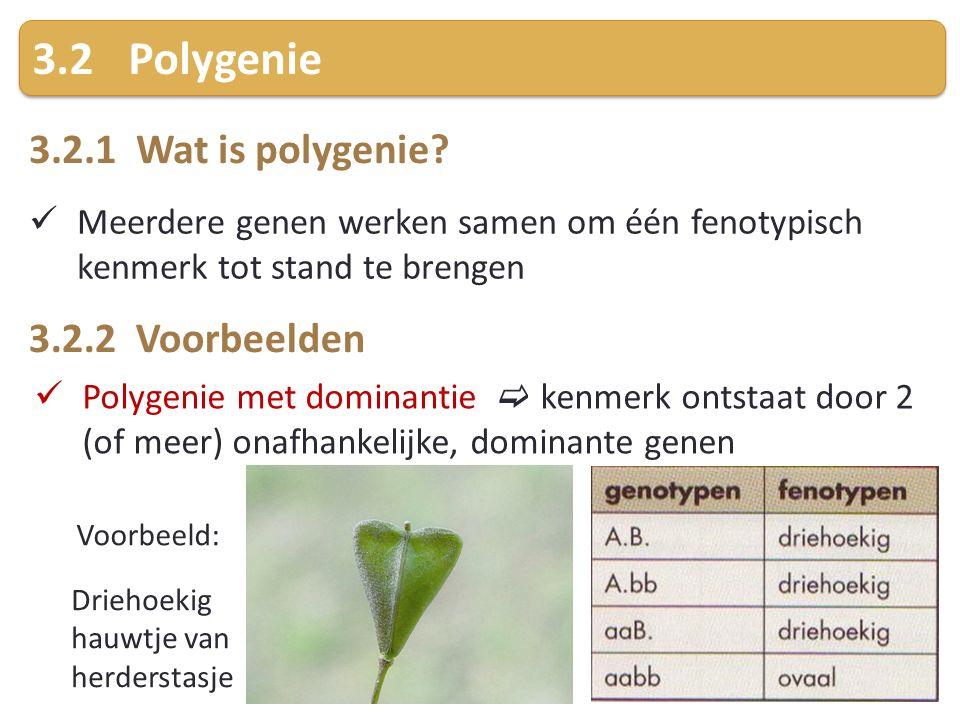 3.2 Polygenie 3.2.1 Wat is polygenie 3.2.2 Voorbeelden
