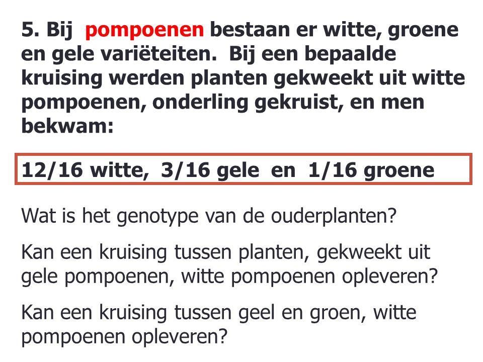 5. Bij pompoenen bestaan er witte, groene en gele variëteiten