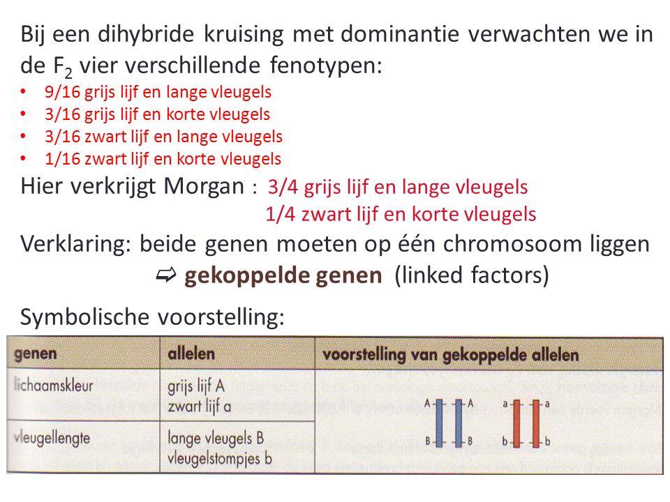 Hier verkrijgt Morgan : 3/4 grijs lijf en lange vleugels