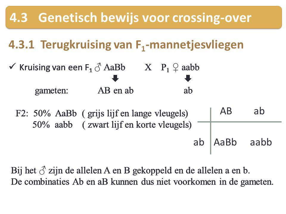 4.3 Genetisch bewijs voor crossing-over