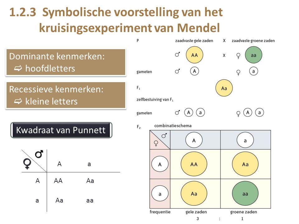 1.2.3 Symbolische voorstelling van het kruisingsexperiment van Mendel