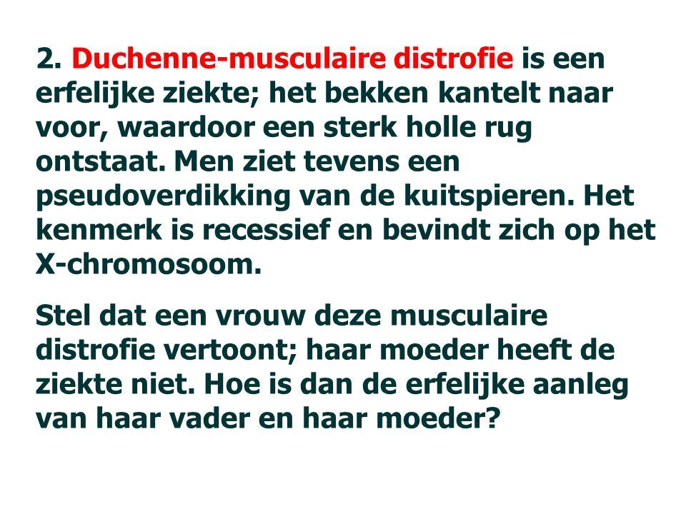 2. Duchenne-musculaire distrofie is een erfelijke ziekte; het bekken kantelt naar voor, waardoor een sterk holle rug ontstaat. Men ziet tevens een pseudoverdikking van de kuitspieren. Het kenmerk is recessief en bevindt zich op het X-chromosoom.