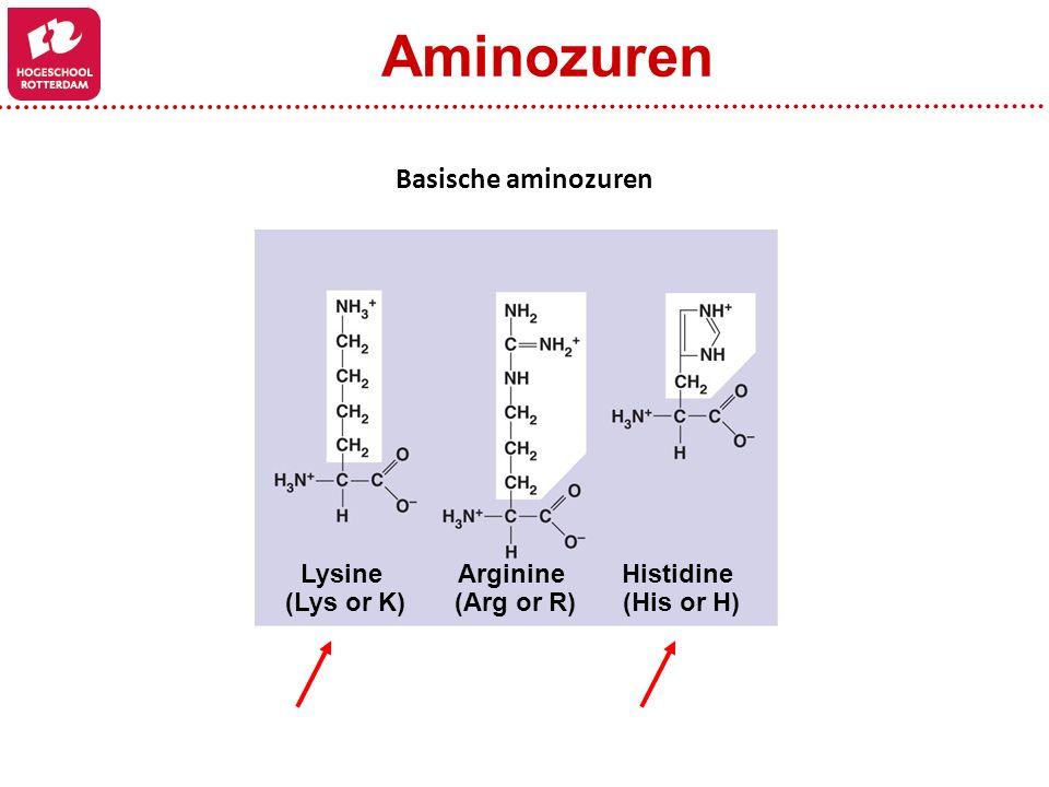 Aminozuren Basische aminozuren Lysine (Lys or K) Arginine (Arg or R)