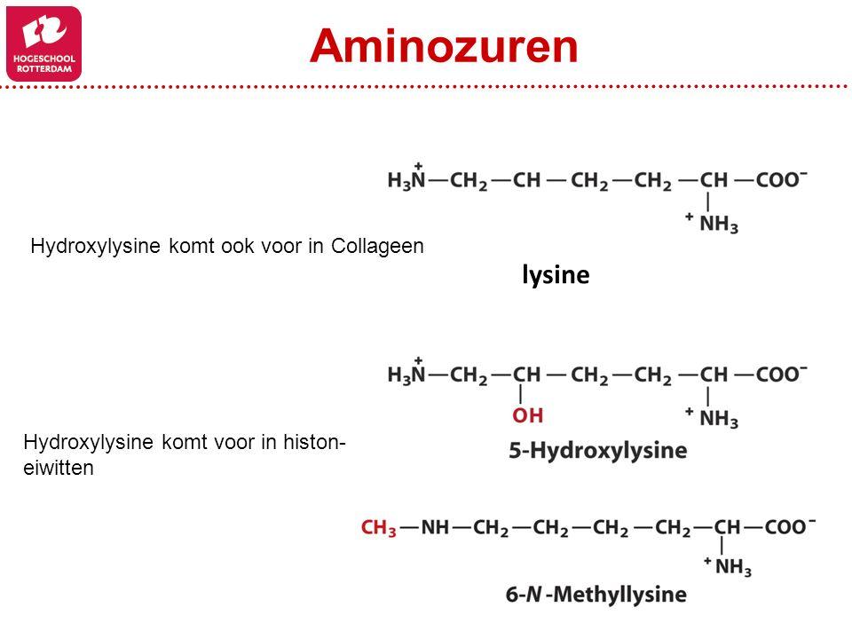 Aminozuren lysine Hydroxylysine komt ook voor in Collageen
