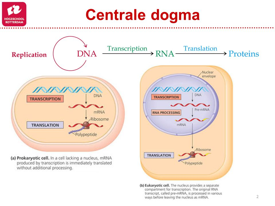 Centrale dogma