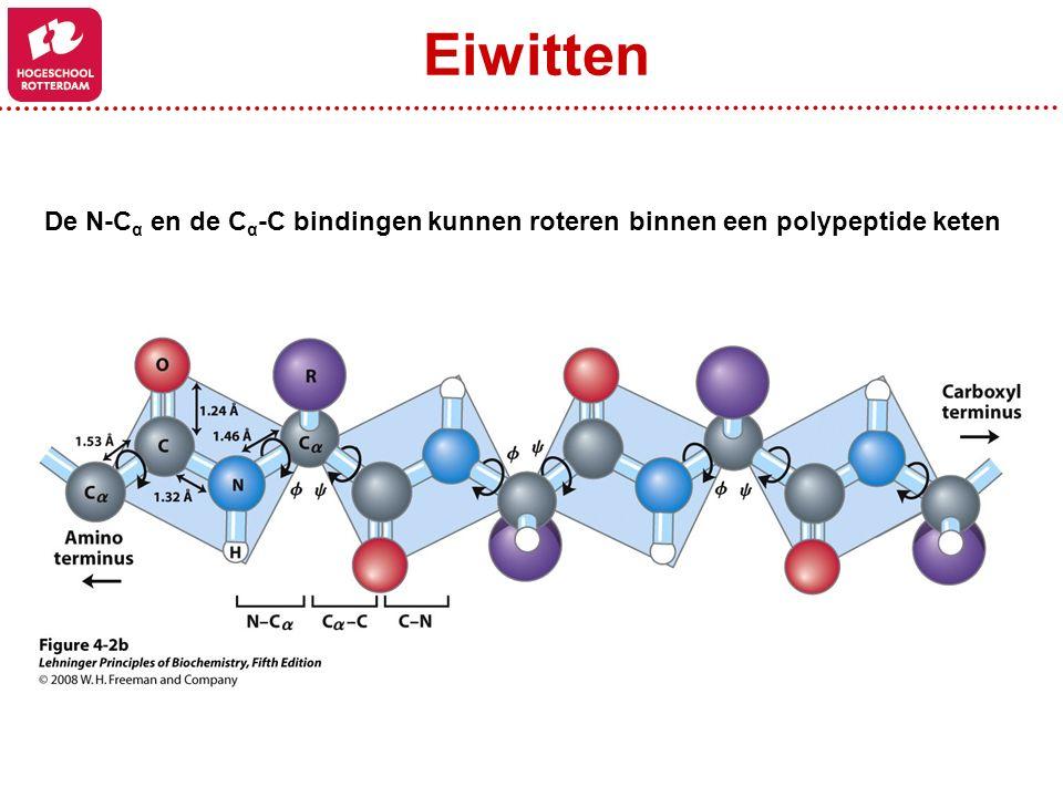 Eiwitten De N-Cα en de Cα-C bindingen kunnen roteren binnen een polypeptide keten