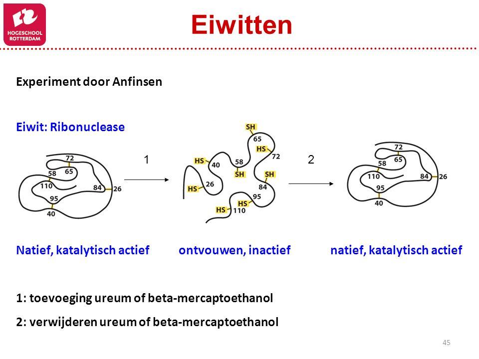 Eiwitten Experiment door Anfinsen Eiwit: Ribonuclease