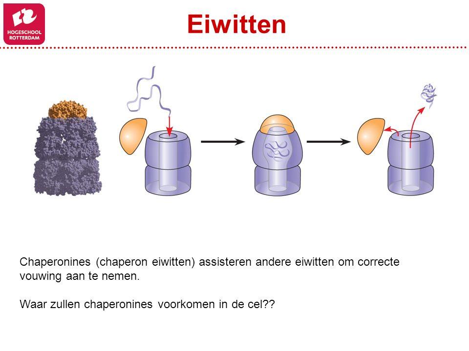 Eiwitten Chaperonines (chaperon eiwitten) assisteren andere eiwitten om correcte vouwing aan te nemen.