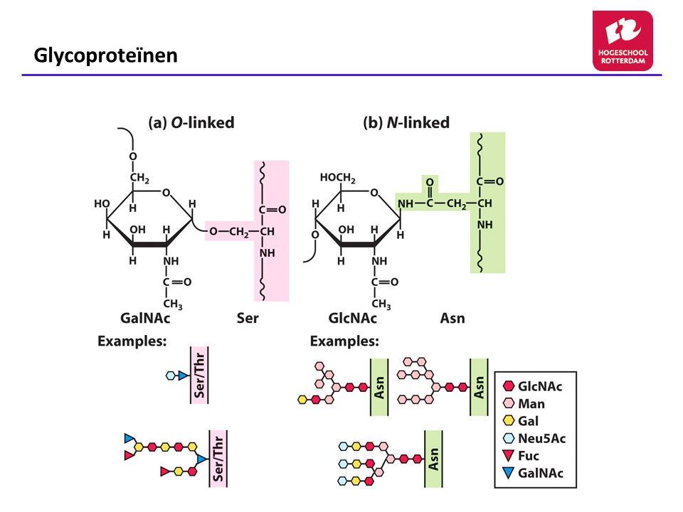 Glycoproteïnen