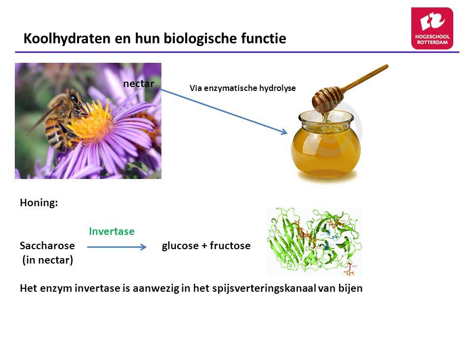 Koolhydraten en hun biologische functie