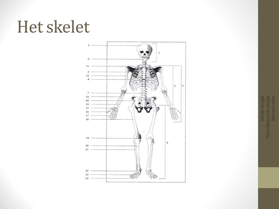 Het skelet Johan bugel Noorderpoortcollege Winschoten