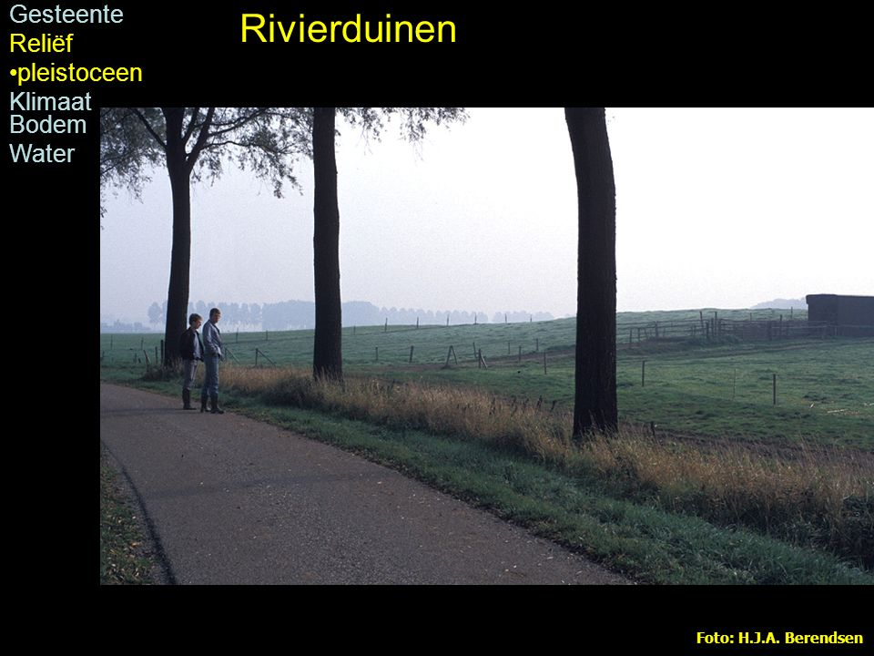 Rivierduinen Rivierduin bij Dreumel Gesteente Reliëf pleistoceen