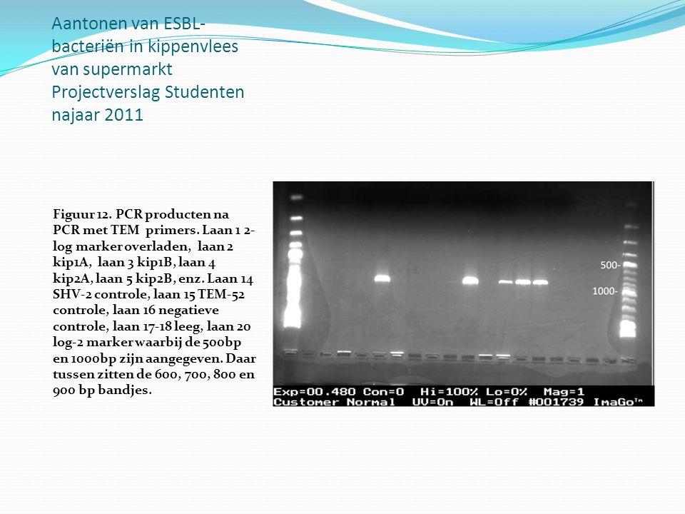 Aantonen van ESBL-bacteriën in kippenvlees van supermarkt Projectverslag Studenten najaar 2011
