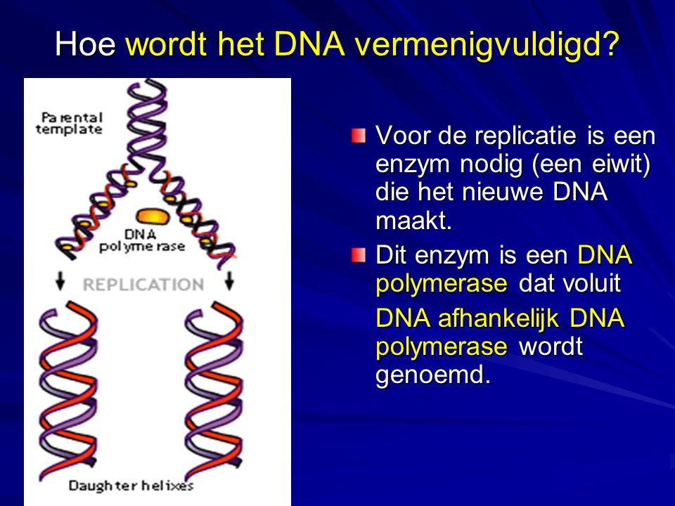 Hoe wordt het DNA vermenigvuldigd