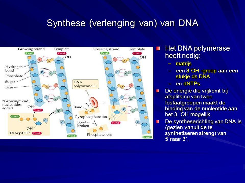 Synthese (verlenging van) van DNA