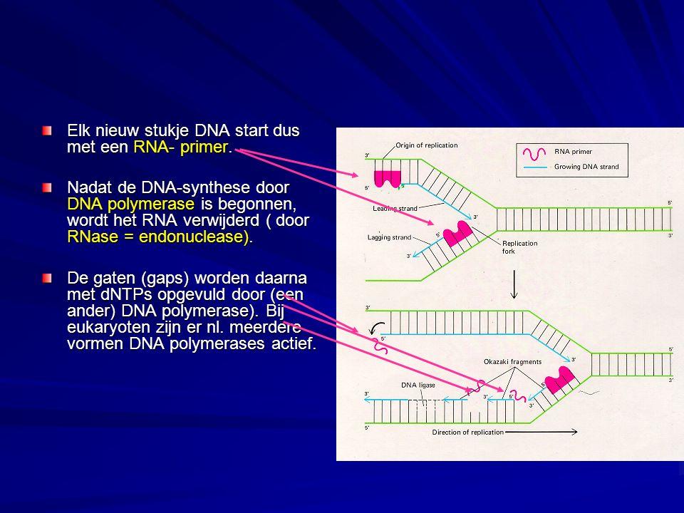 Elk nieuw stukje DNA start dus met een RNA- primer.