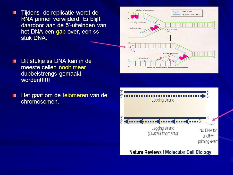 Tijdens de replicatie wordt de RNA primer verwijderd