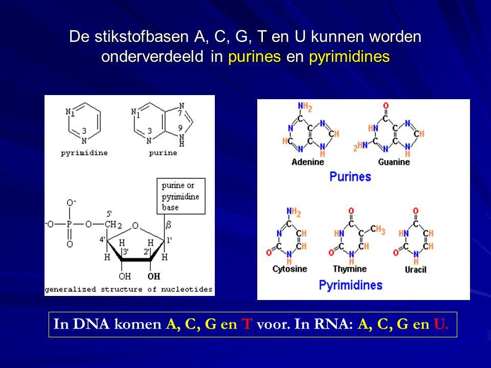 De stikstofbasen A, C, G, T en U kunnen worden onderverdeeld in purines en pyrimidines