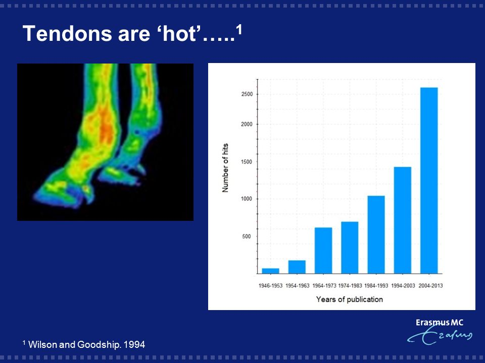 Tendons are 'hot'…..1 1 Wilson and Goodship. 1994