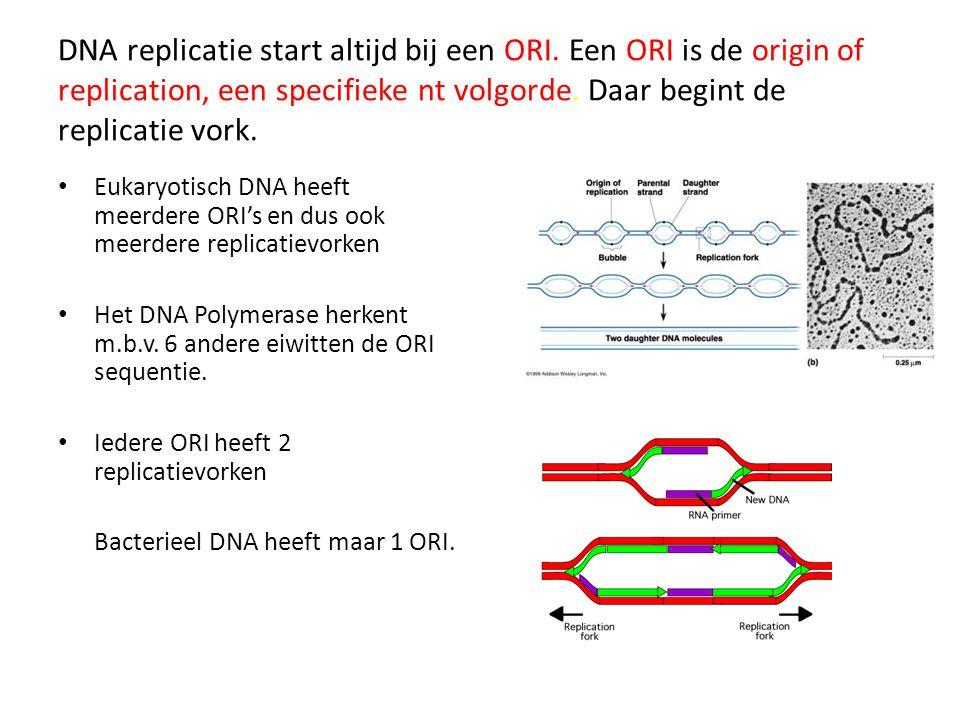 DNA replicatie start altijd bij een ORI