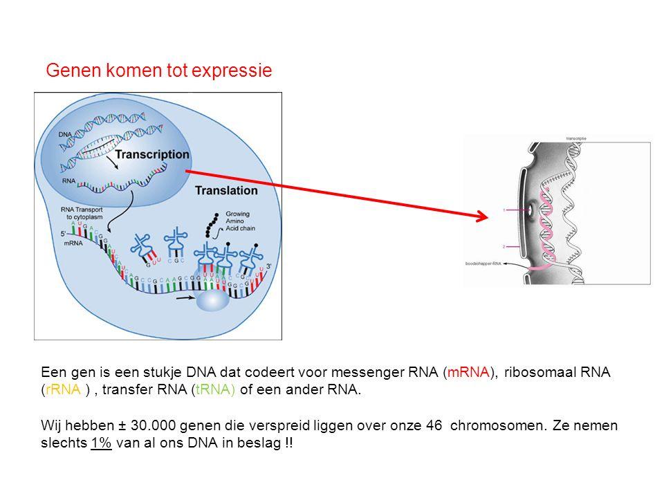 Genen komen tot expressie