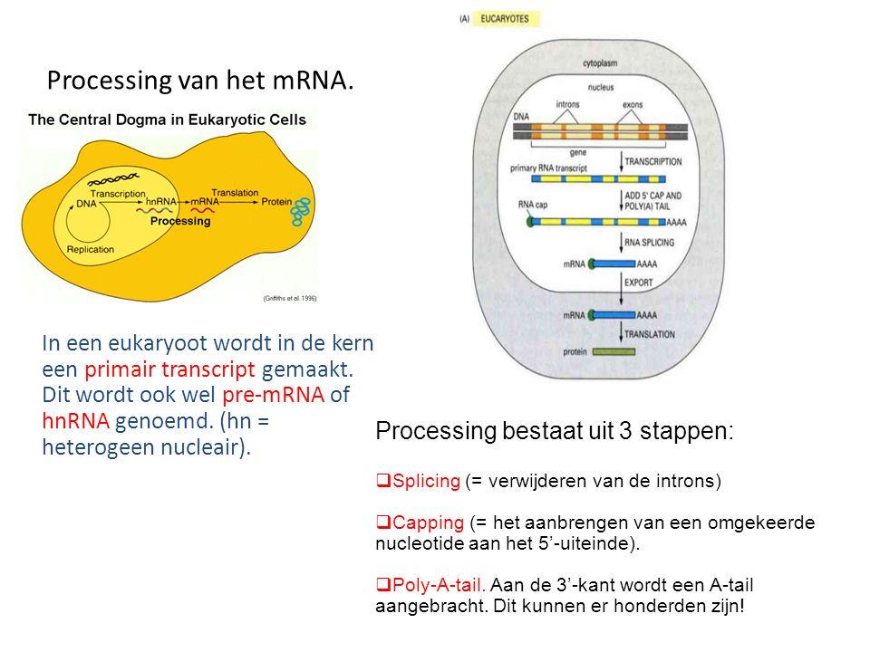 Processing van het mRNA.