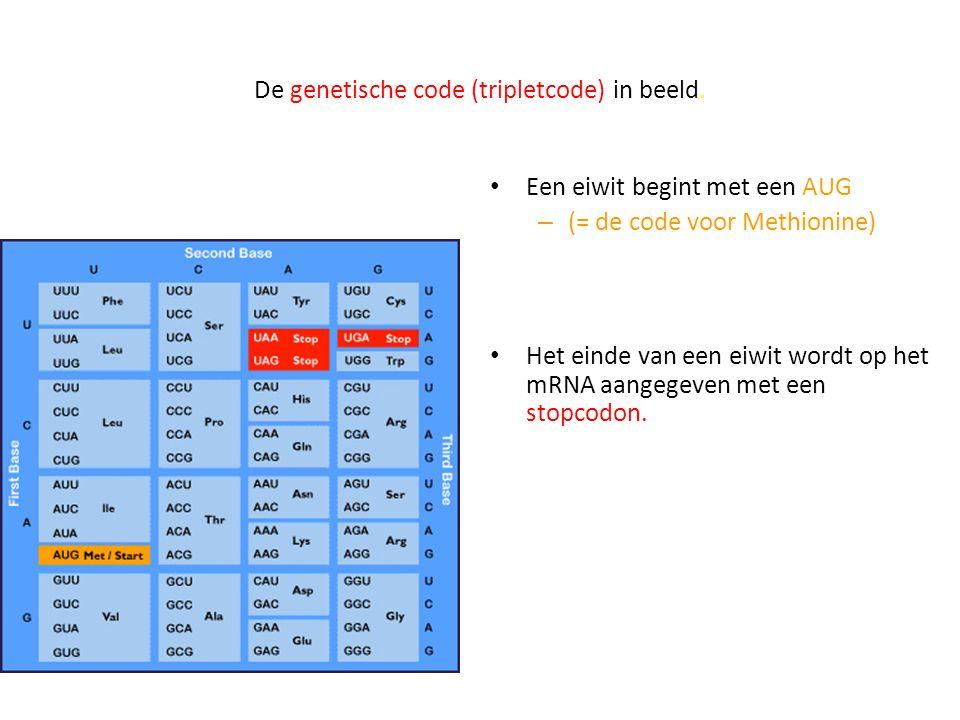 De genetische code (tripletcode) in beeld.