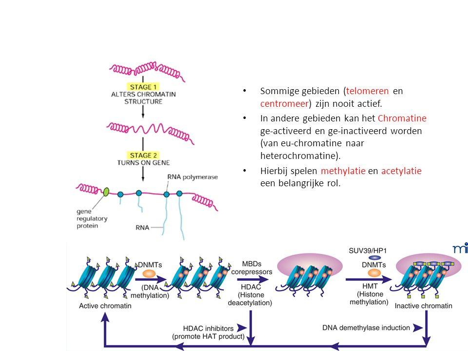 Sommige gebieden (telomeren en centromeer) zijn nooit actief.