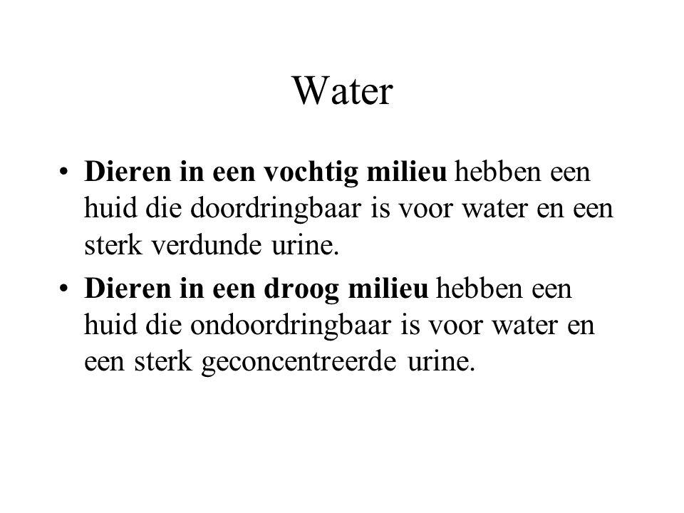 Water Dieren in een vochtig milieu hebben een huid die doordringbaar is voor water en een sterk verdunde urine.