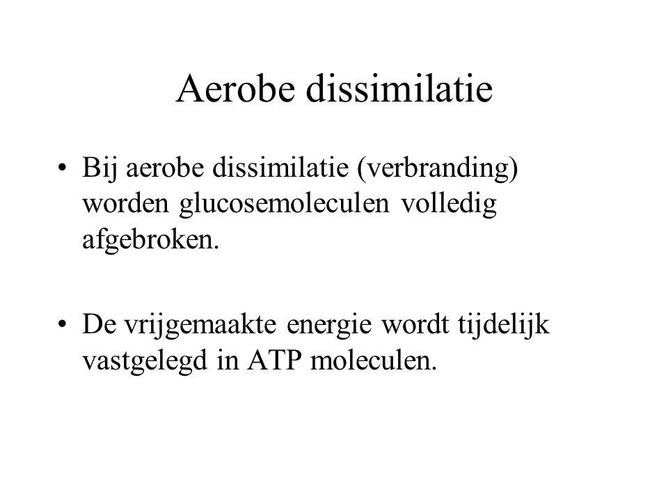 Aerobe dissimilatie Bij aerobe dissimilatie (verbranding) worden glucosemoleculen volledig afgebroken.