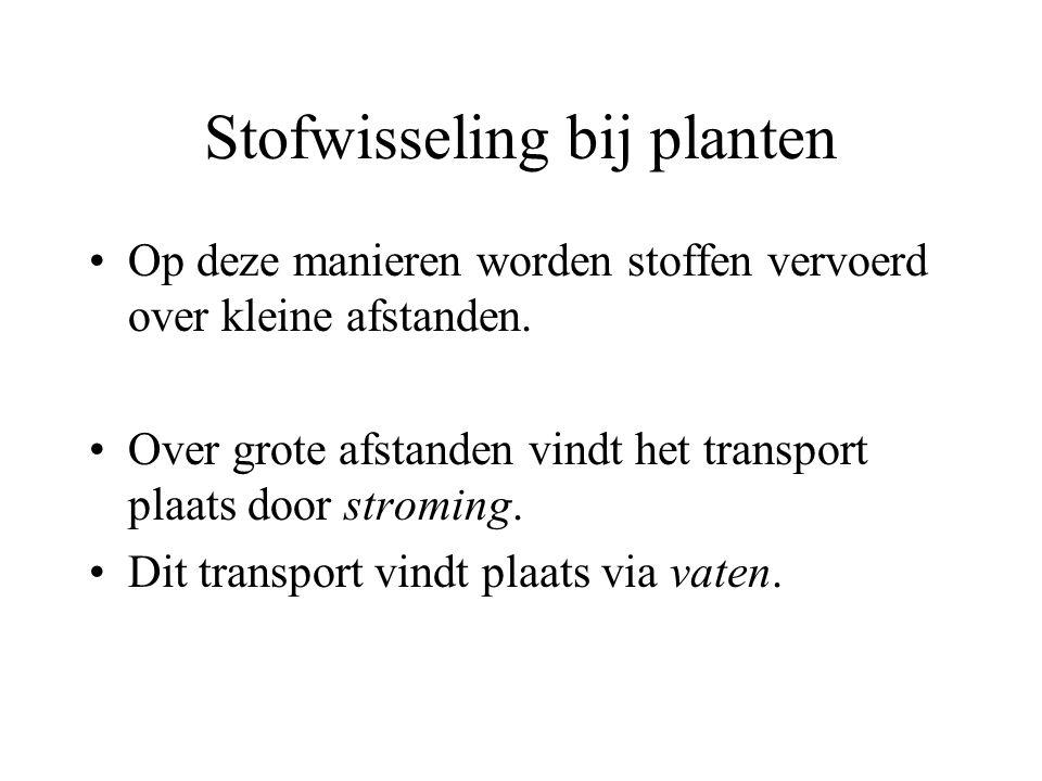 Stofwisseling bij planten
