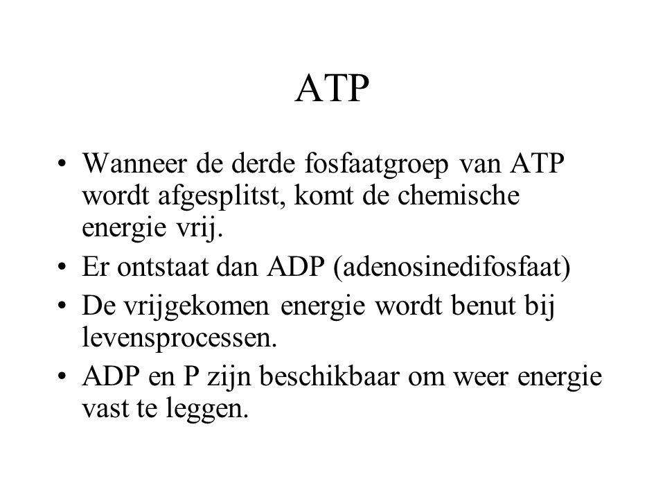 ATP Wanneer de derde fosfaatgroep van ATP wordt afgesplitst, komt de chemische energie vrij. Er ontstaat dan ADP (adenosinedifosfaat)