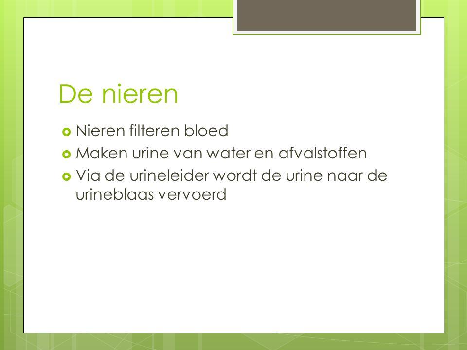 De nieren Nieren filteren bloed Maken urine van water en afvalstoffen