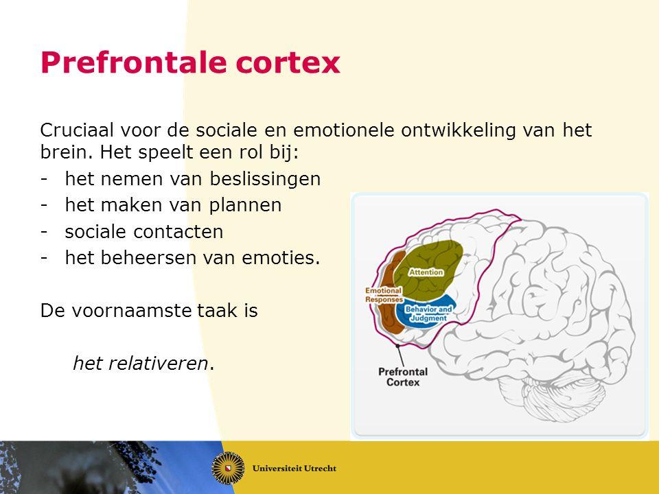 Prefrontale cortex Cruciaal voor de sociale en emotionele ontwikkeling van het brein. Het speelt een rol bij: