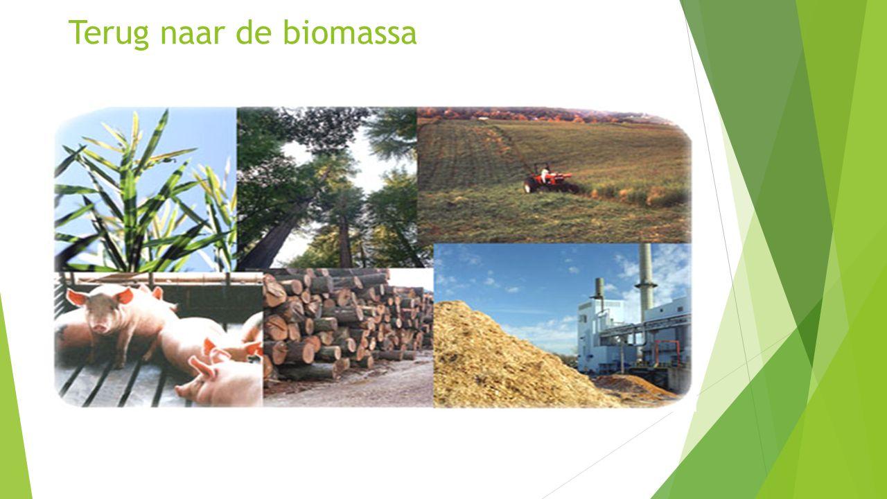 Terug naar de biomassa