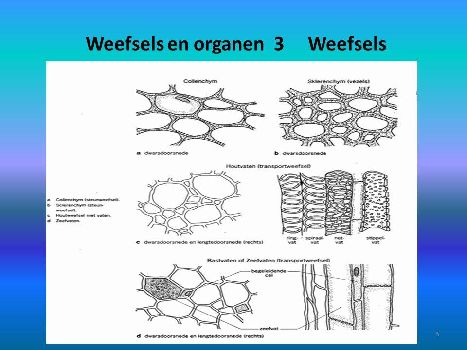Weefsels en organen 3 Weefsels