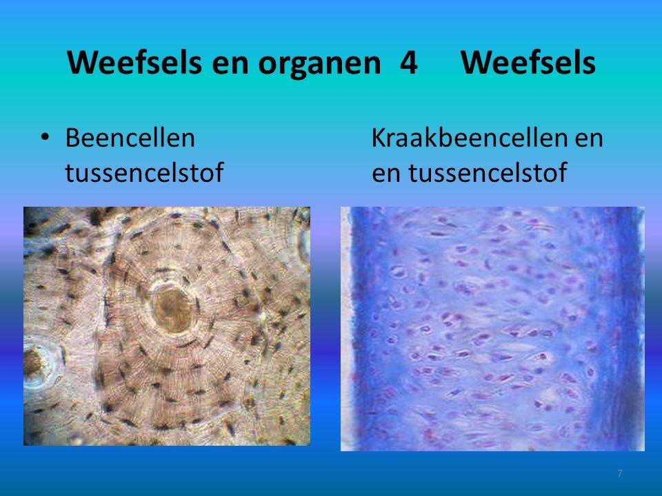 Weefsels en organen 4 Weefsels