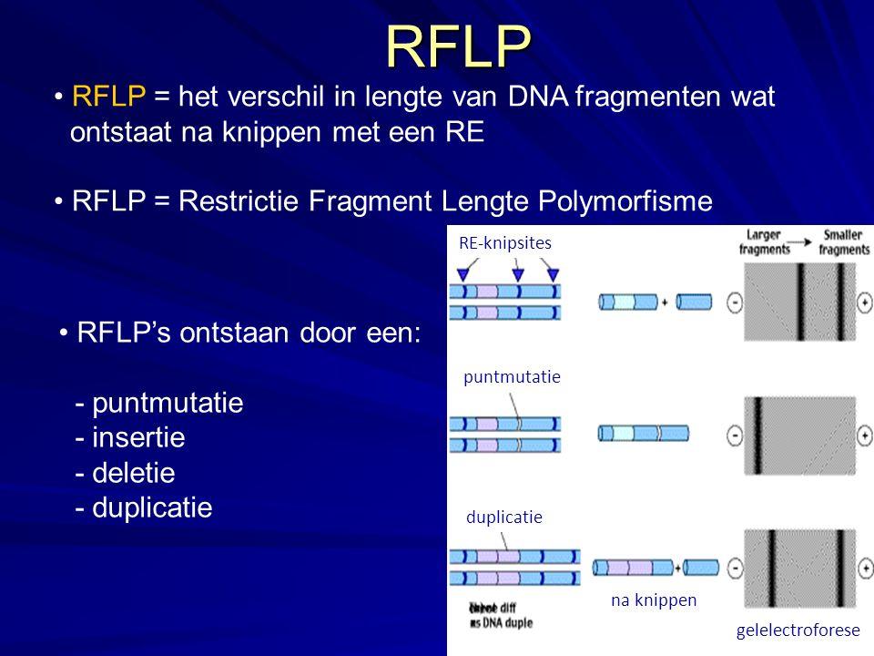RFLP RFLP = het verschil in lengte van DNA fragmenten wat