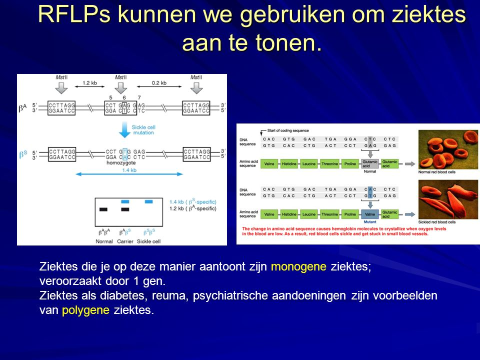 RFLPs kunnen we gebruiken om ziektes aan te tonen.