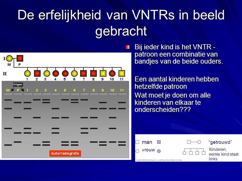 De erfelijkheid van VNTRs in beeld gebracht