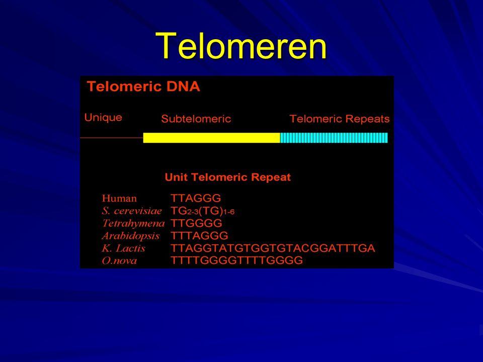 Telomeren