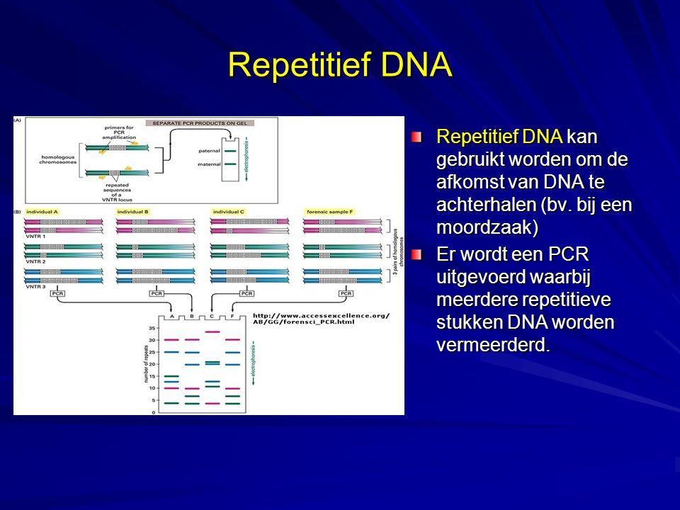 Repetitief DNA Repetitief DNA kan gebruikt worden om de afkomst van DNA te achterhalen (bv. bij een moordzaak)