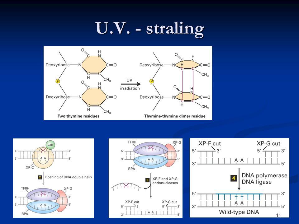 U.V. - straling