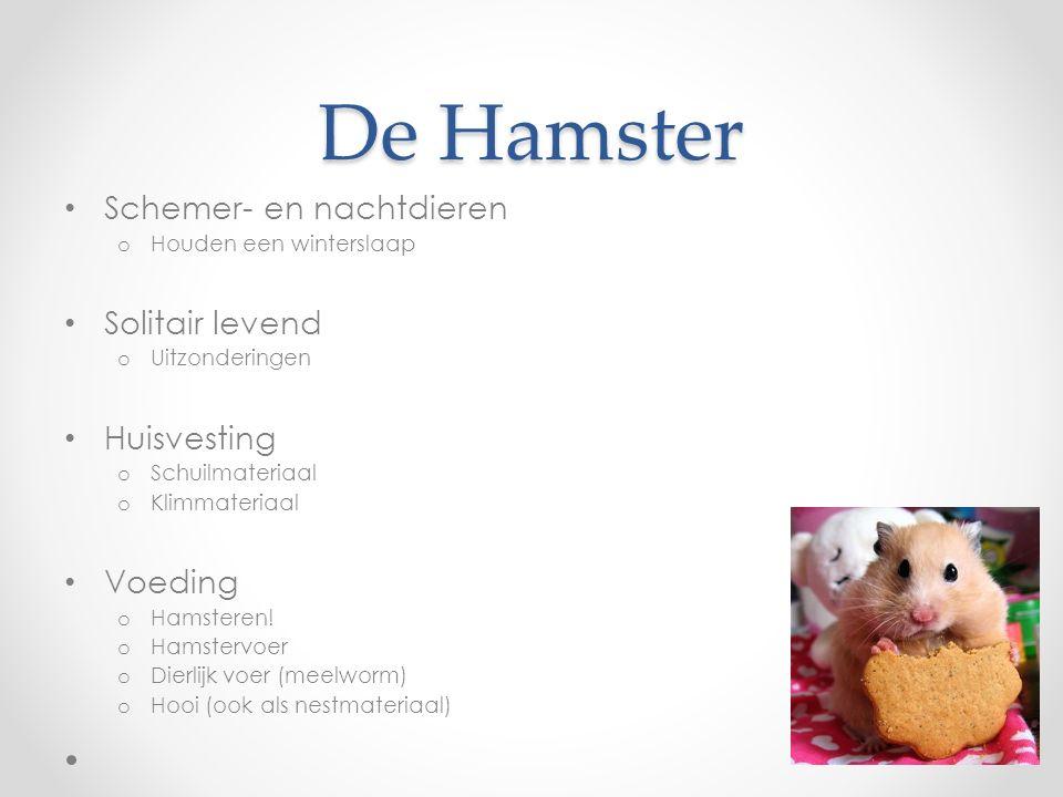 De Hamster Schemer- en nachtdieren Solitair levend Huisvesting Voeding