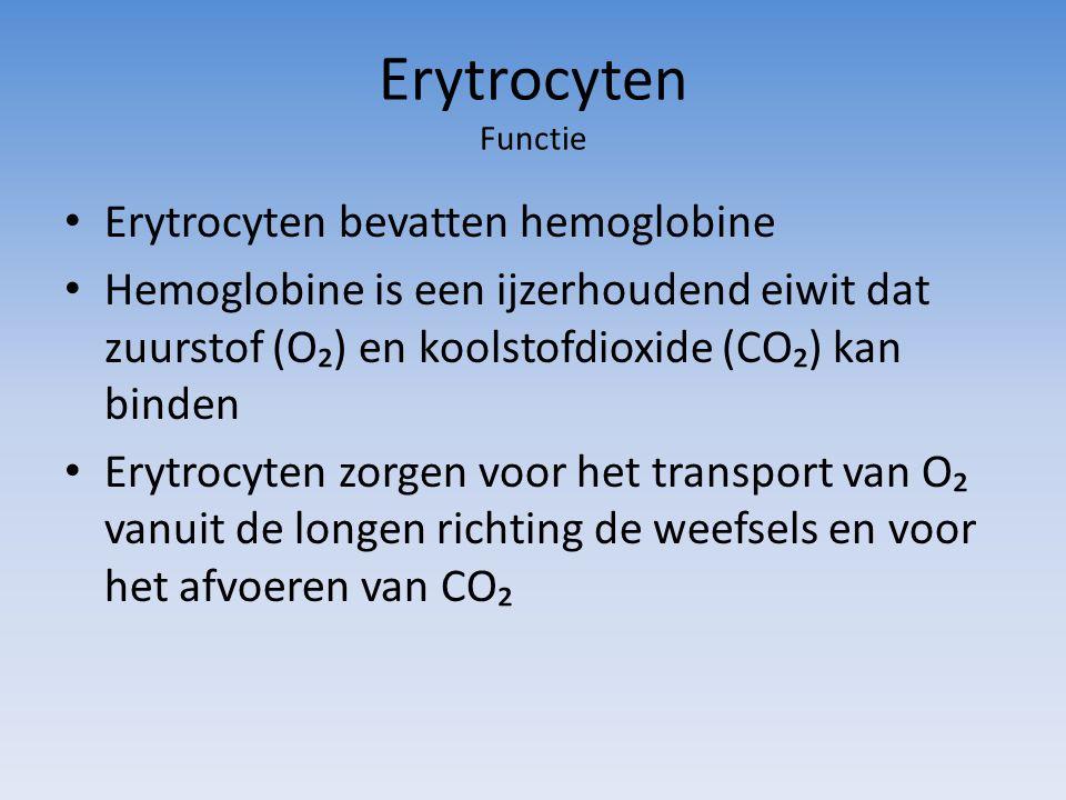 Erytrocyten Functie Erytrocyten bevatten hemoglobine