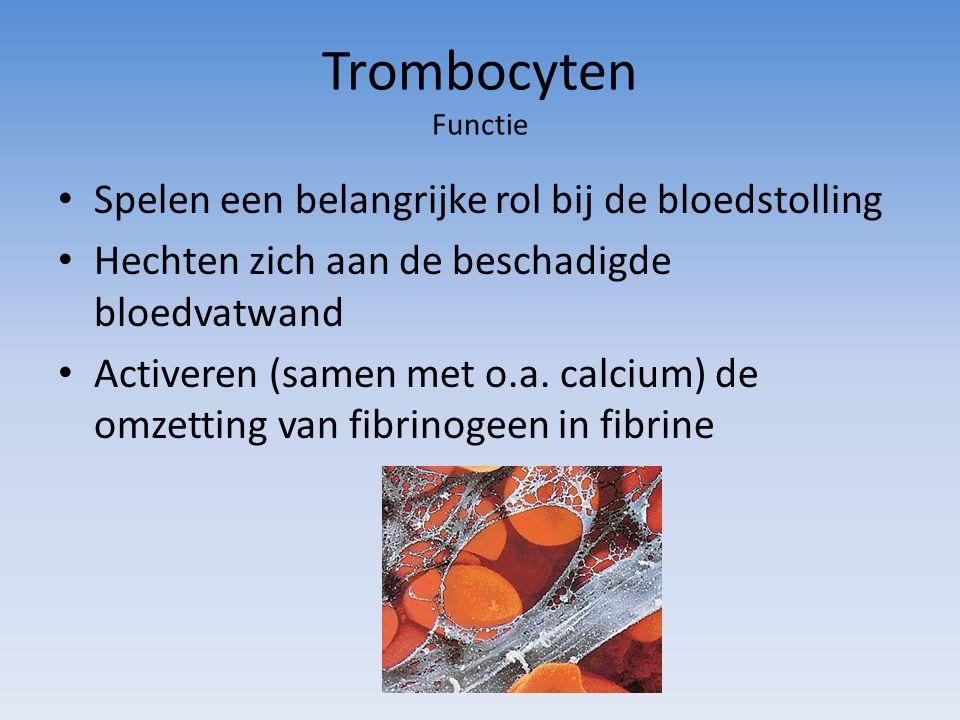 Trombocyten Functie Spelen een belangrijke rol bij de bloedstolling