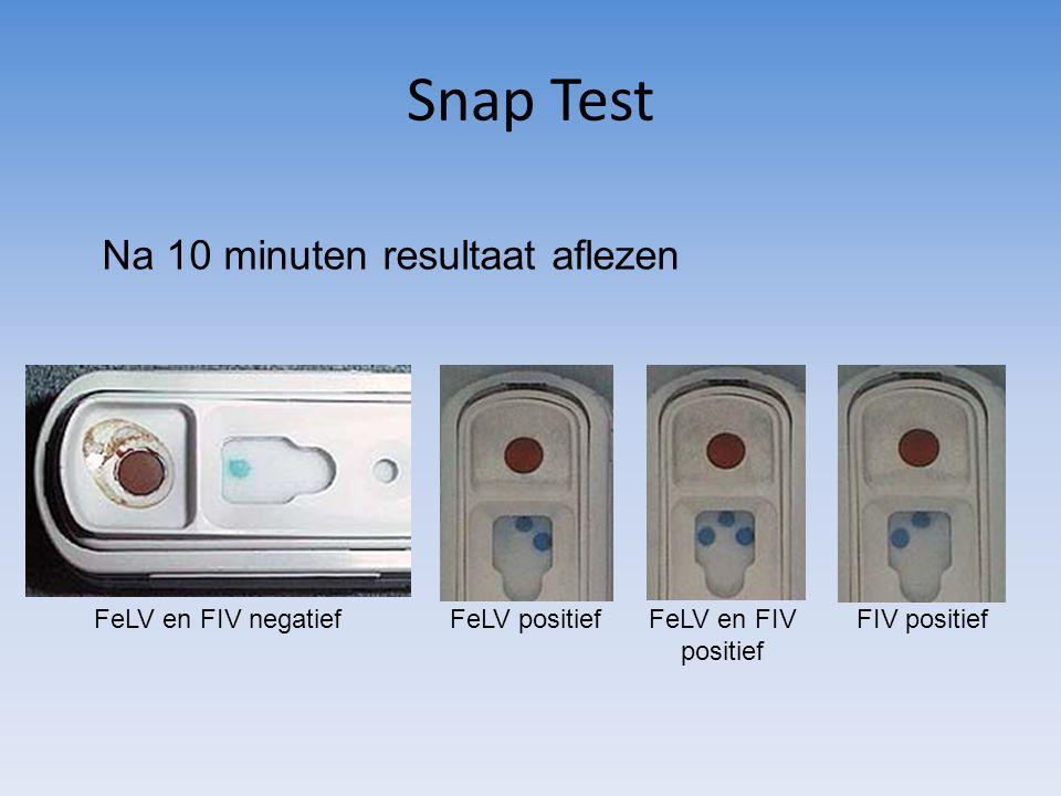 Snap Test Na 10 minuten resultaat aflezen FeLV en FIV negatief